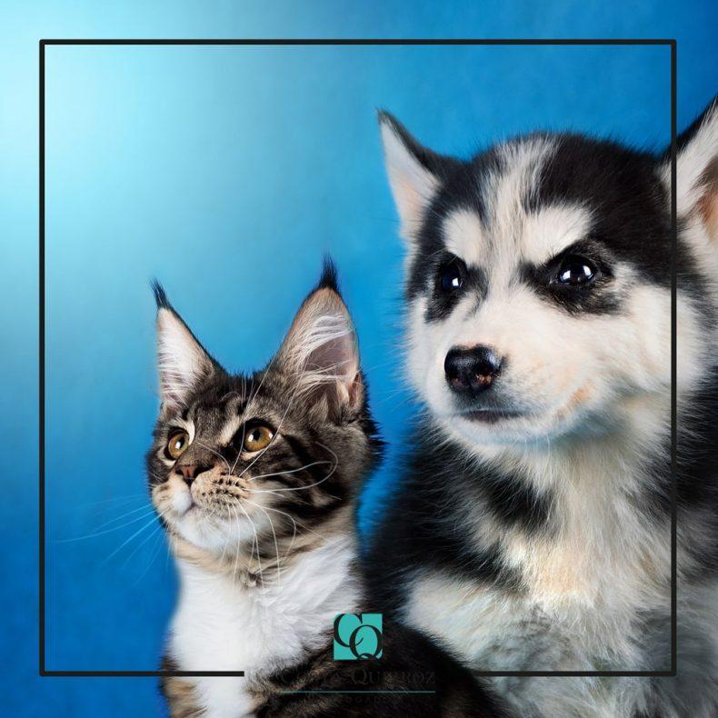 Sancionada lei que aumenta punição a quem maltrata cães e gatos